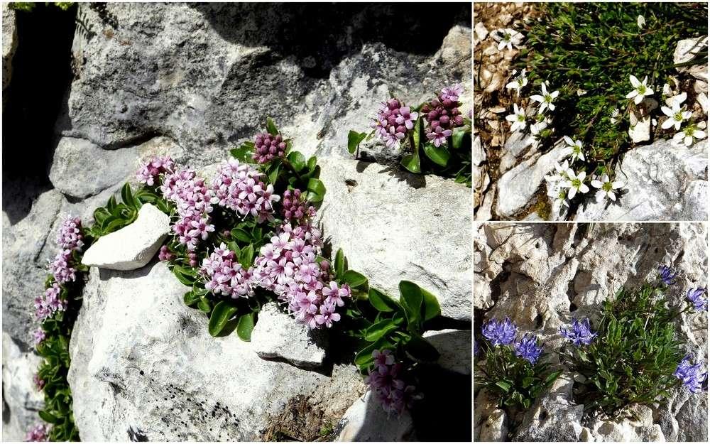 Dolomites Groupe du Sella - juillet 2016 30_val10