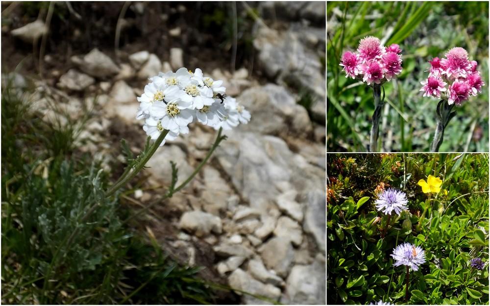 Dolomites Groupe du Sella - juillet 2016 32_ach10