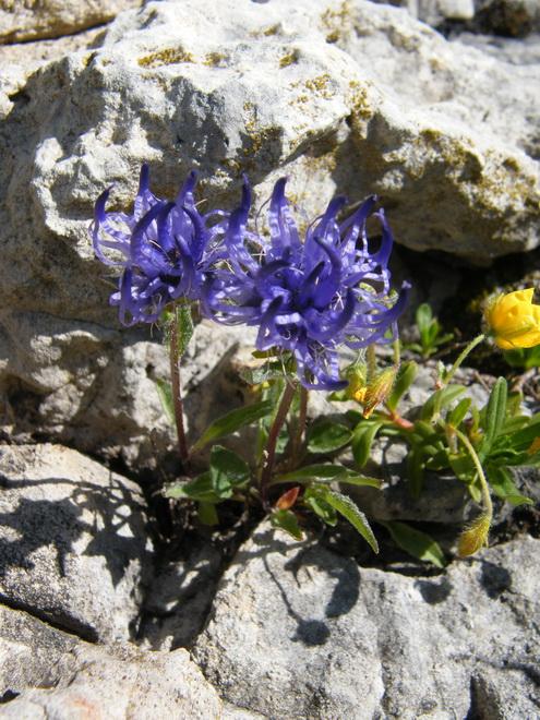 Du 13 au 19 juillet dans le Val di Fassa 34_phy10