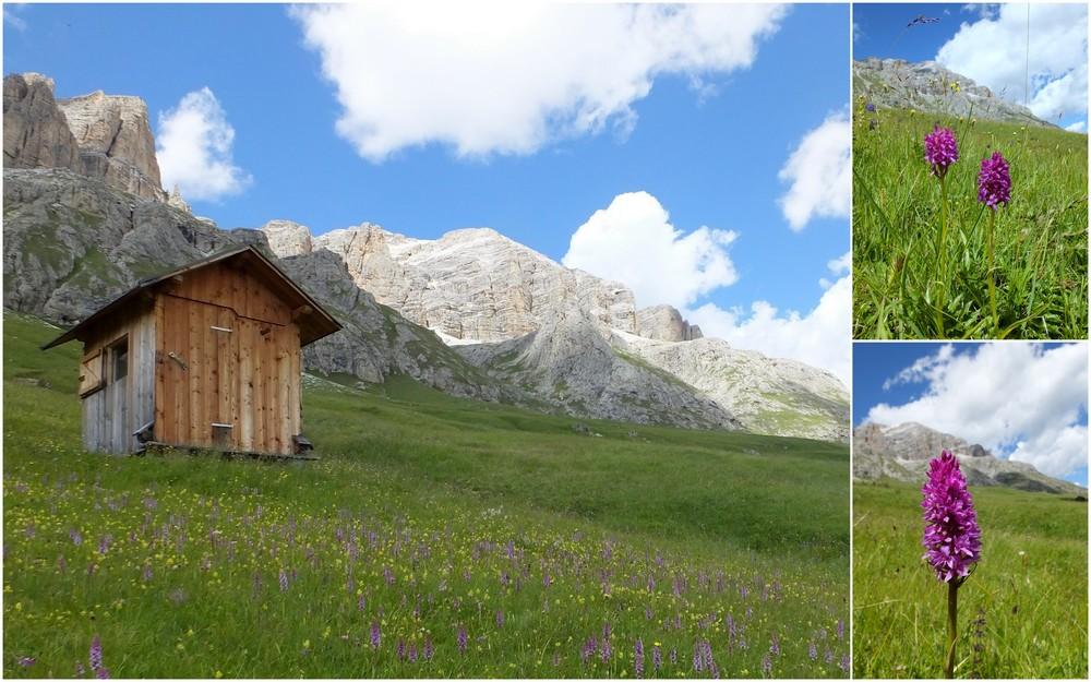 Dolomites Groupe du Sella - juillet 2016 34_por10