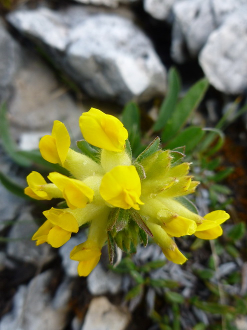 Les Dolomites d'Ampezzo et le Monte Pelmo 3_anth10