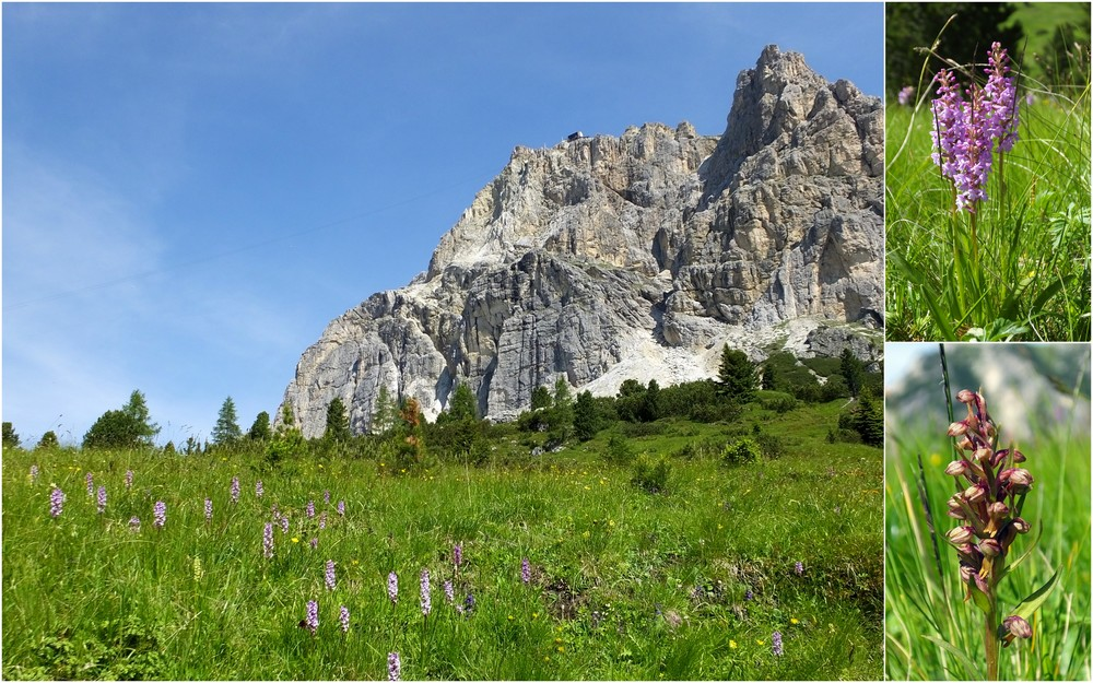 Dolomites Passo Falzarego Juillet 2016 3_lagu10