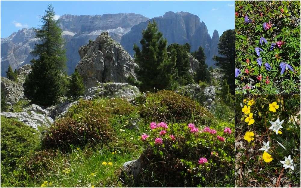 Dolomites Groupe du Sella - juillet 2016 40_cit10