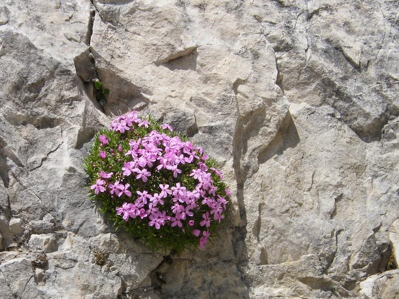 Du 13 au 19 juillet dans le Val di Fassa 4_sile10