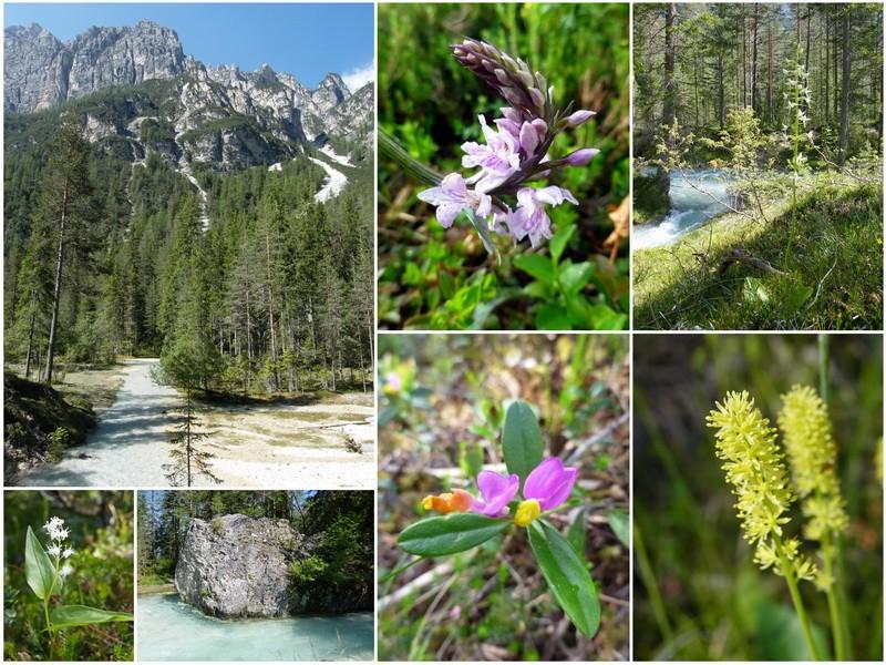 Une semaine dans le Parc naturel Fanes-Senes-Braies 4_val_10