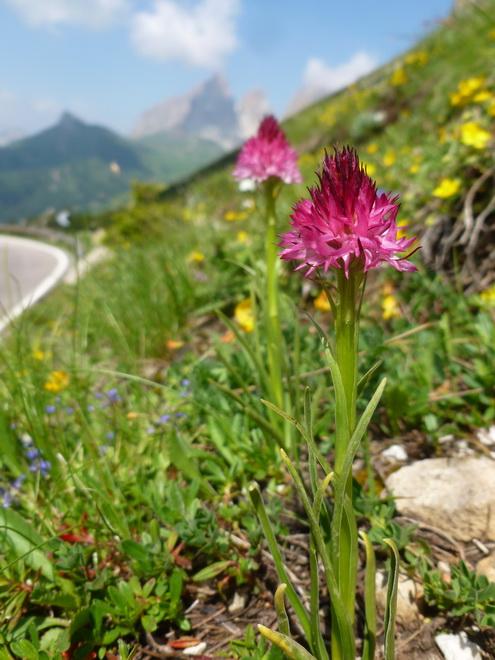 Du 13 au 19 juillet dans le Val di Fassa 51_gym10