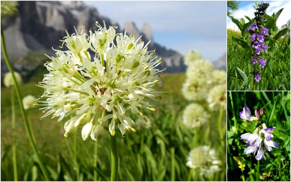 Dolomites Groupe du Sella - juillet 2016 7_alli10