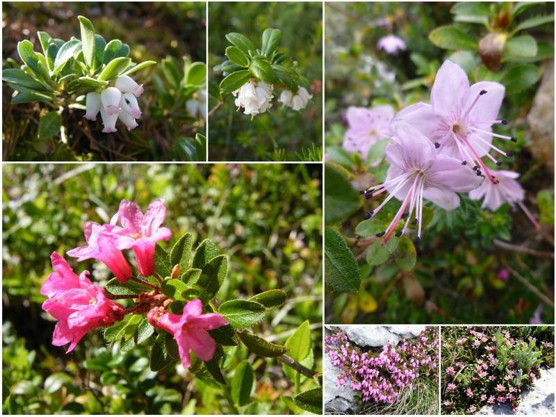 Une semaine dans le Parc naturel Fanes-Senes-Braies 7_eric10