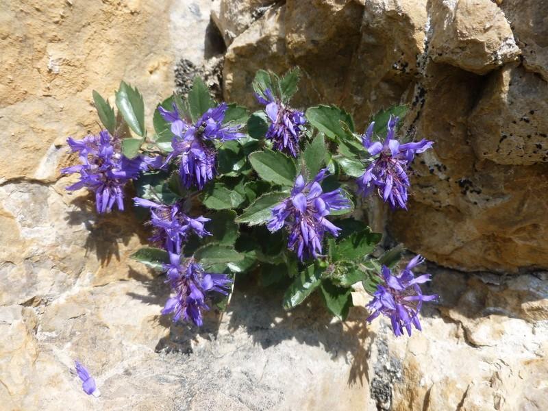 Les Dolomites d'Ampezzo et le Monte Pelmo 7_paed10