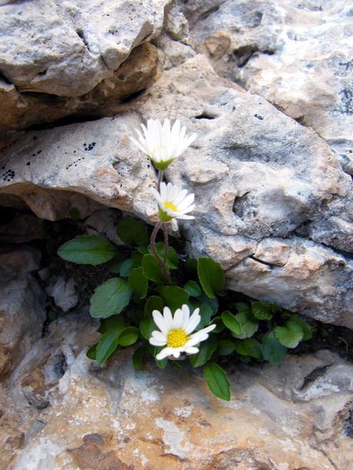 Les Dolomites d'Ampezzo et le Monte Pelmo 8_aste10