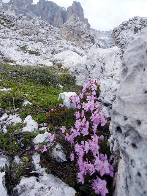 Les Dolomites d'Ampezzo et le Monte Pelmo 8_rhod10