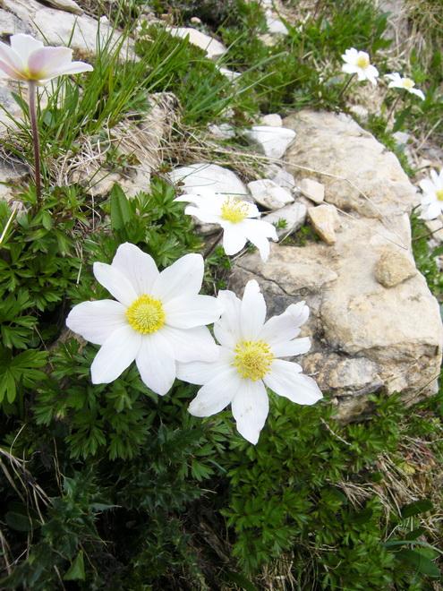 Les Dolomites d'Ampezzo et le Monte Pelmo 9_anem10