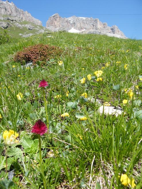 Du 13 au 19 juillet dans le Val di Fassa Gymnad11