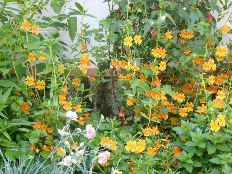 Les premieres floraisons de l'été au jardin P1030019