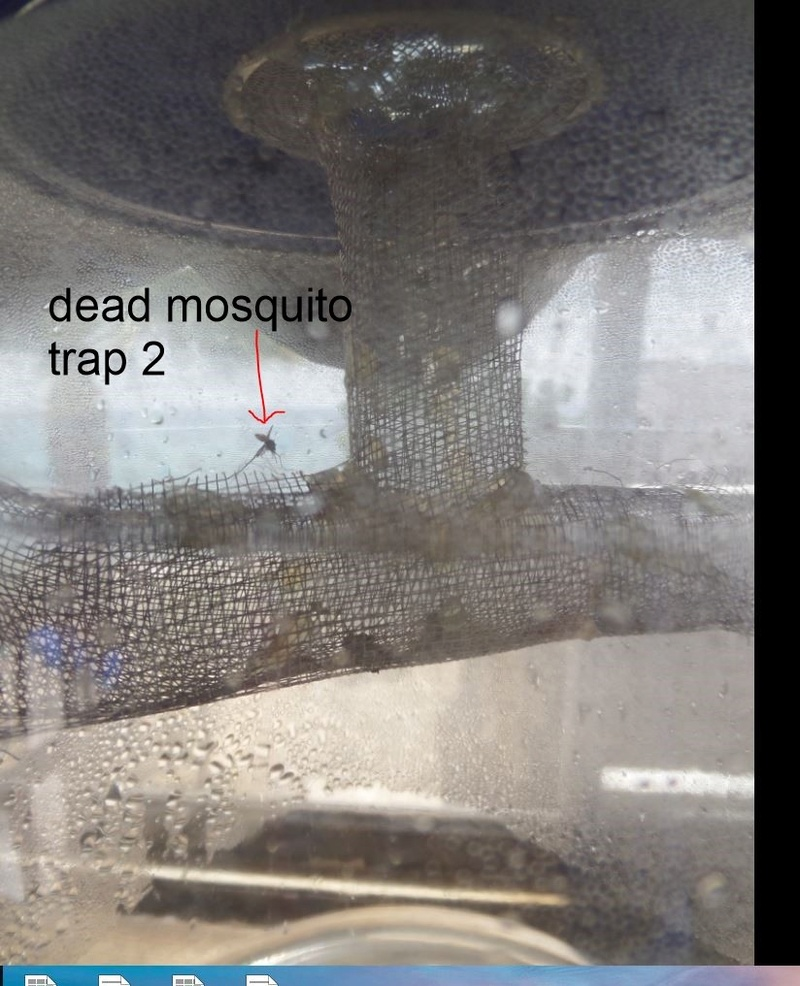 new trap method for mossy for septic or static LV Mosqui15