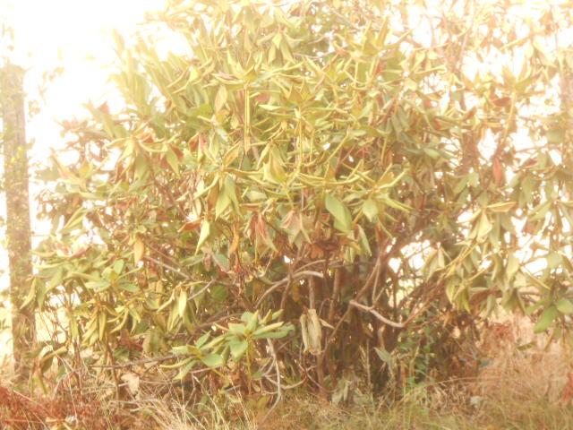 Images et photos, anecdotes, souvenirs et environnement Yugcibien - Page 25 Dscn5314