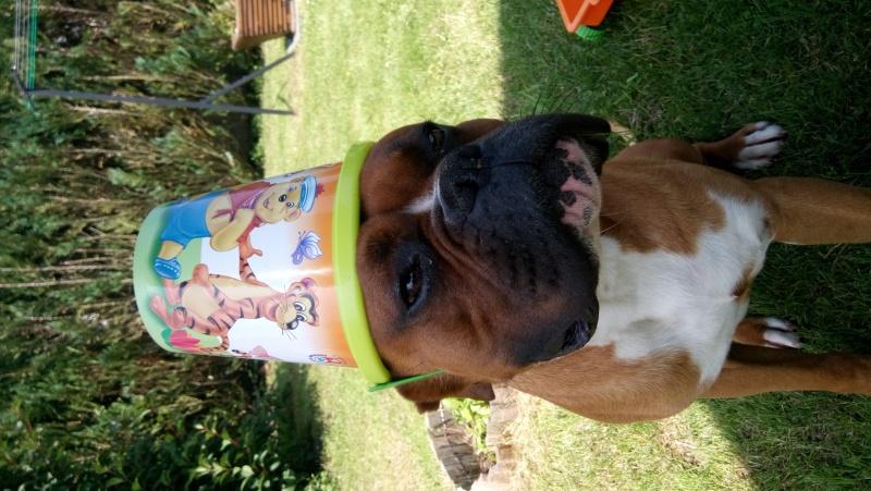 photos de vos chiens au naturel - Page 10 Dsc_0310