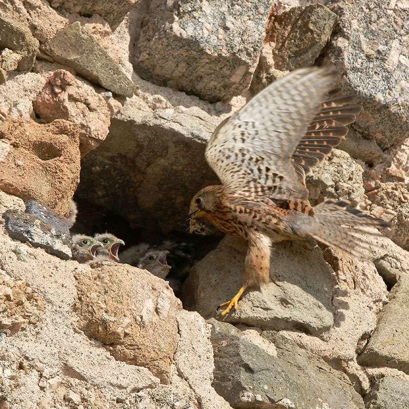 Oiseaux en Corse Img_6810