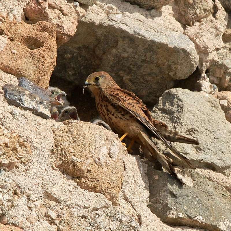 Oiseaux en Corse Img_6811