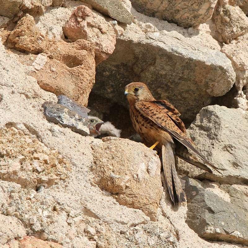 Oiseaux en Corse Img_6812