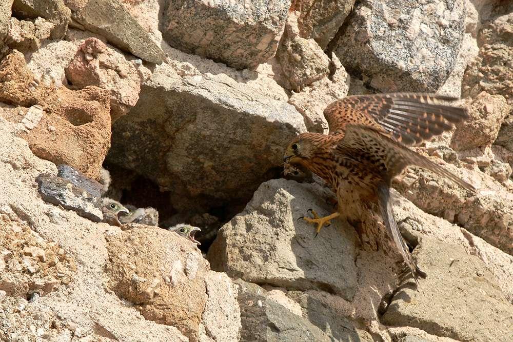 Oiseaux en Corse Img_6813