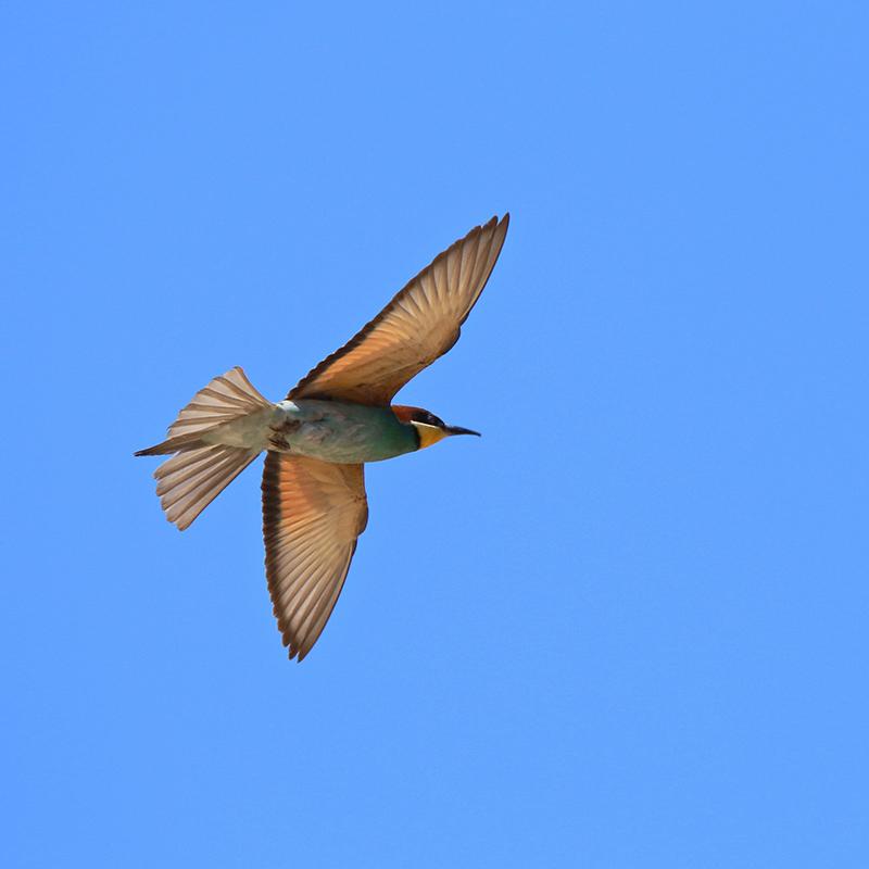 Oiseaux en Corse Img_7016