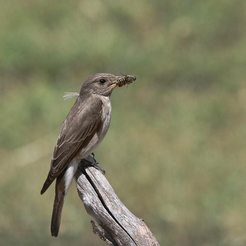 Oiseaux en Corse Img_7118