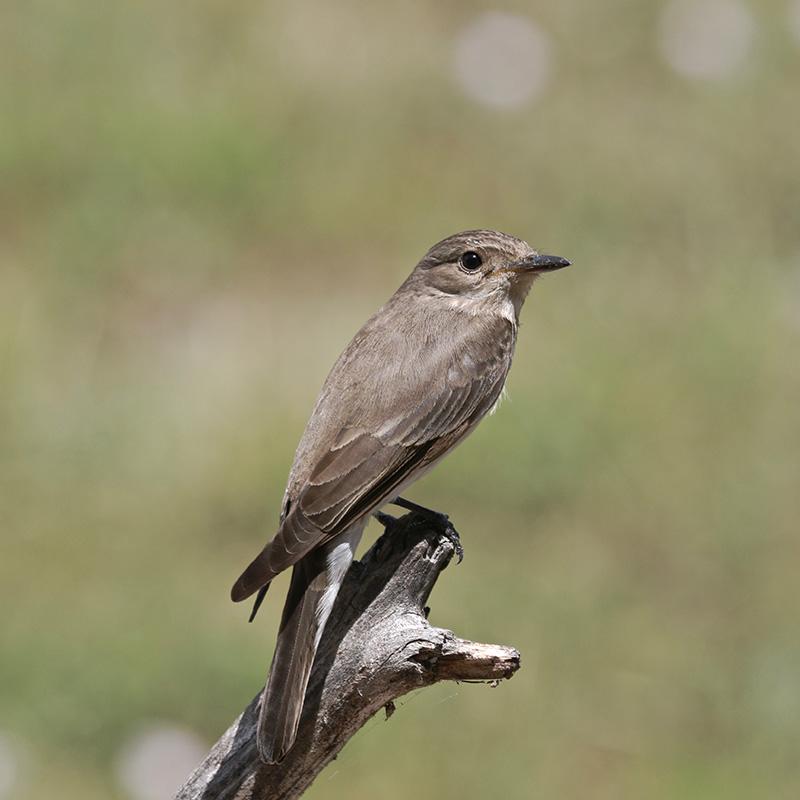 Oiseaux en Corse Img_7119