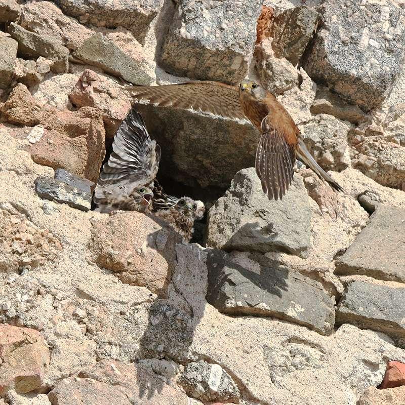 Oiseaux en Corse Img_7210