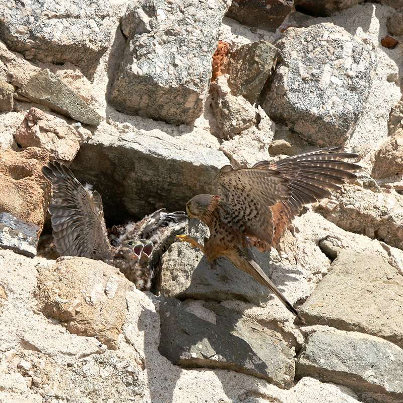 Oiseaux en Corse Img_7211