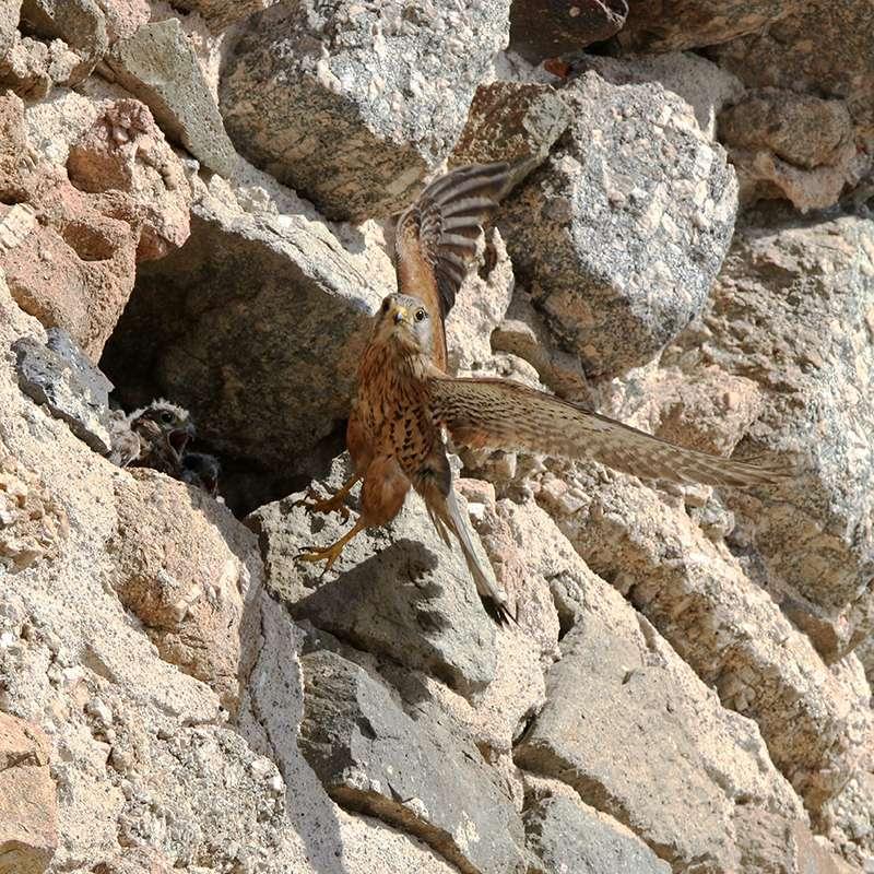 Oiseaux en Corse Img_7212