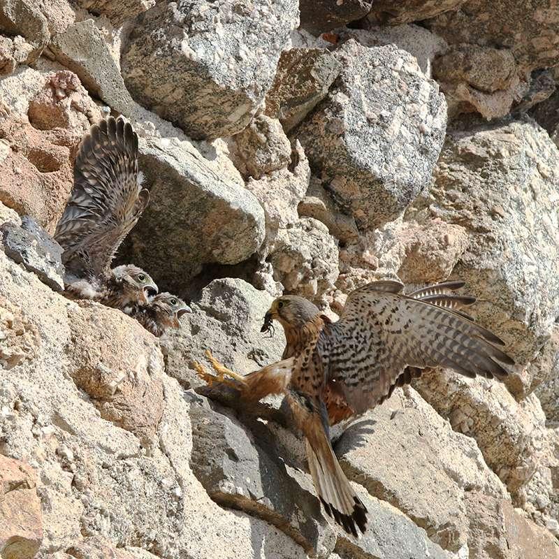 Oiseaux en Corse Img_7213