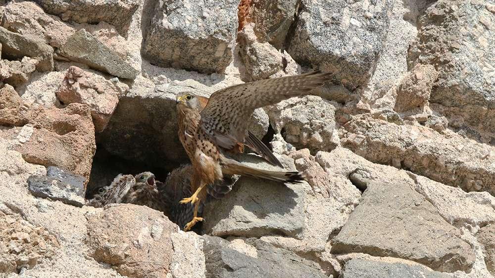 Oiseaux en Corse Img_7214
