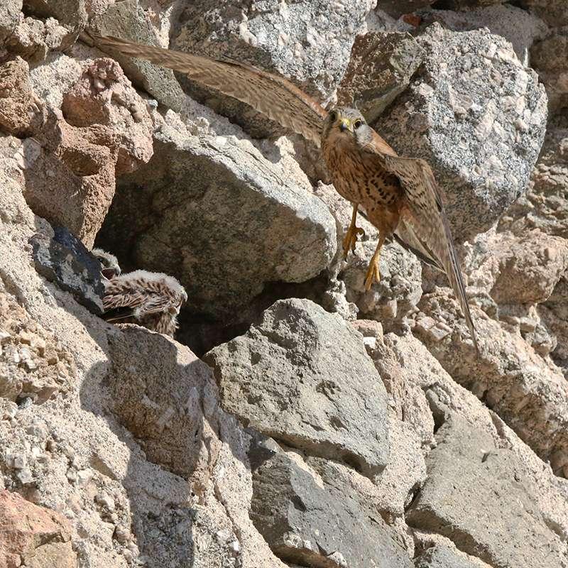 Oiseaux en Corse Img_7310