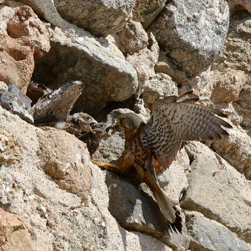 Oiseaux en Corse Img_7311