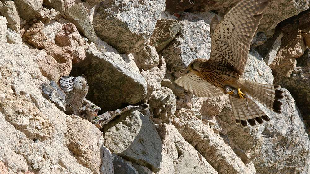 Oiseaux en Corse - Page 2 Img_7312