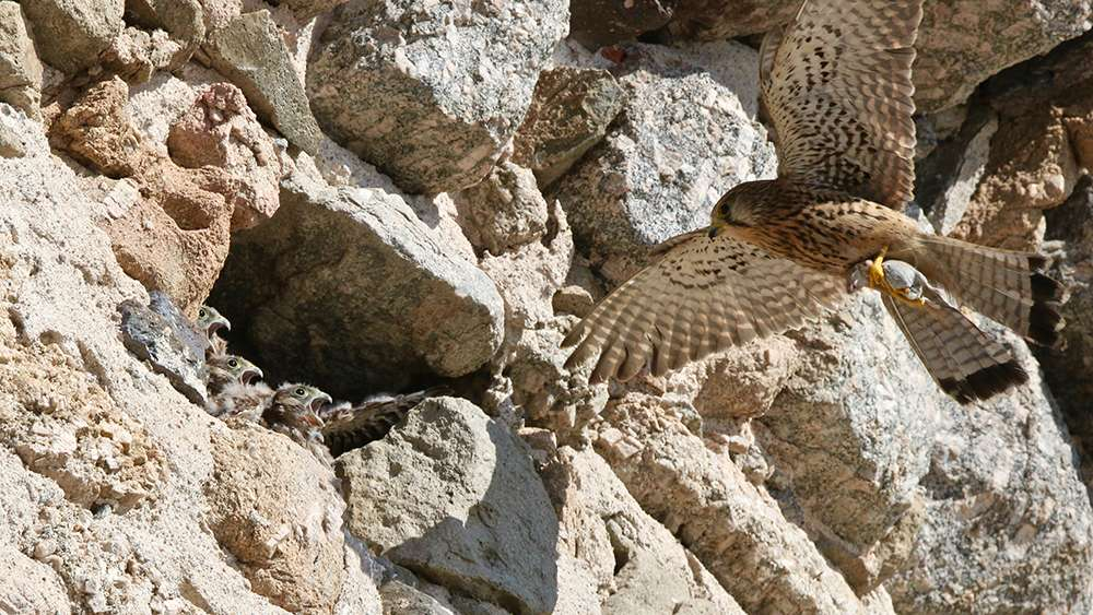 Oiseaux en Corse - Page 2 Img_7313