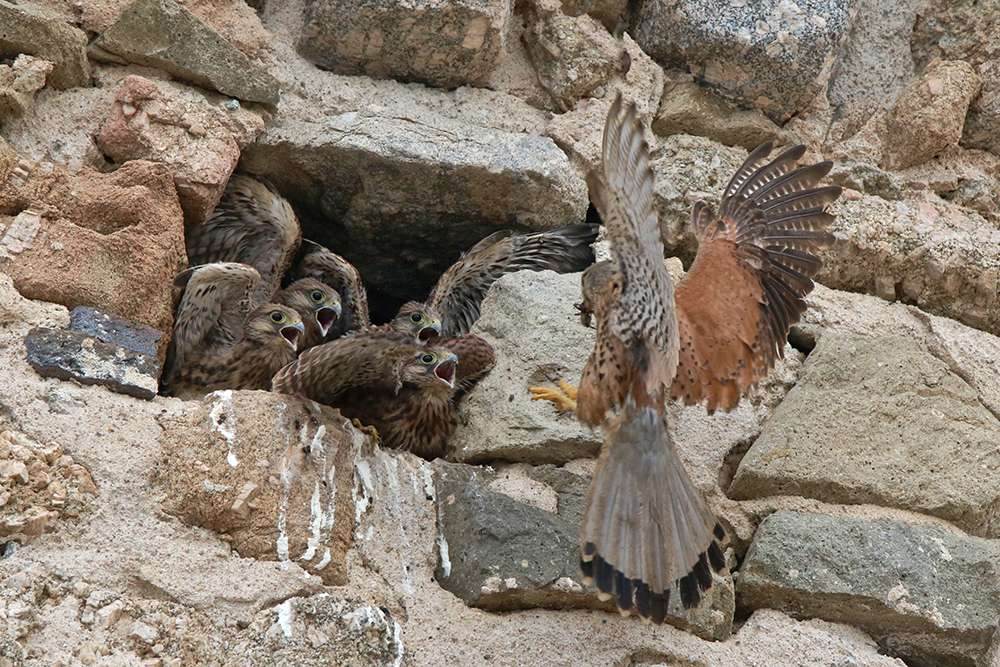 Oiseaux en Corse - Page 2 Img_7410
