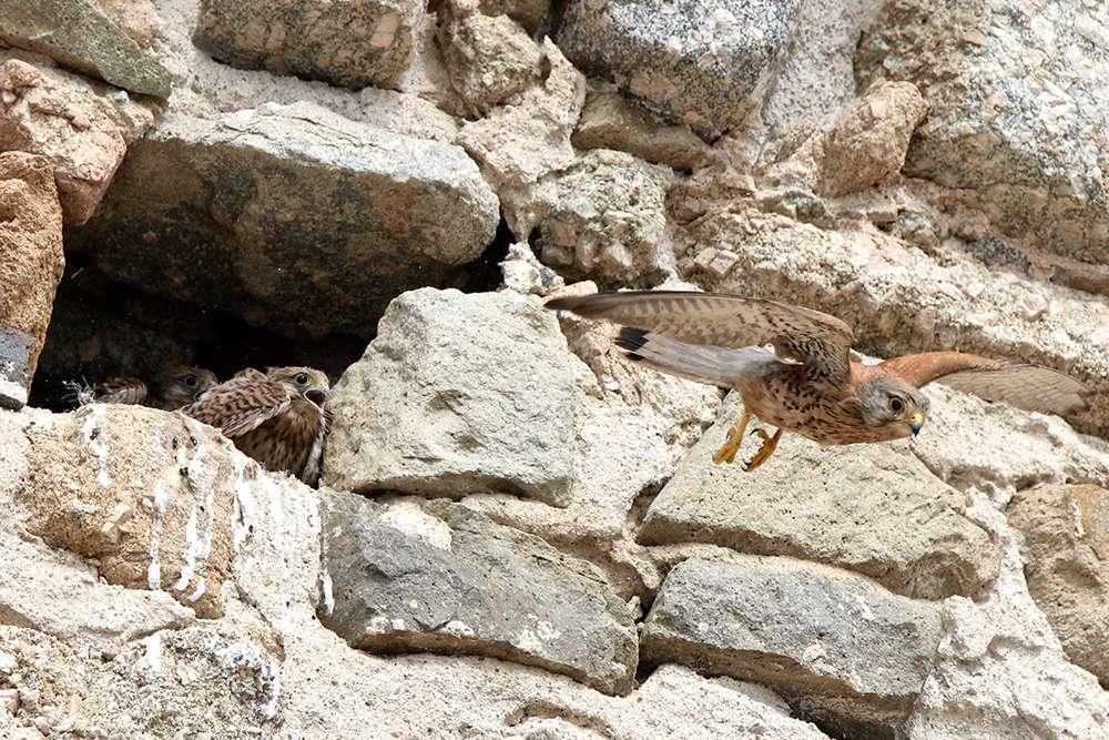 Oiseaux en Corse - Page 2 Img_7510
