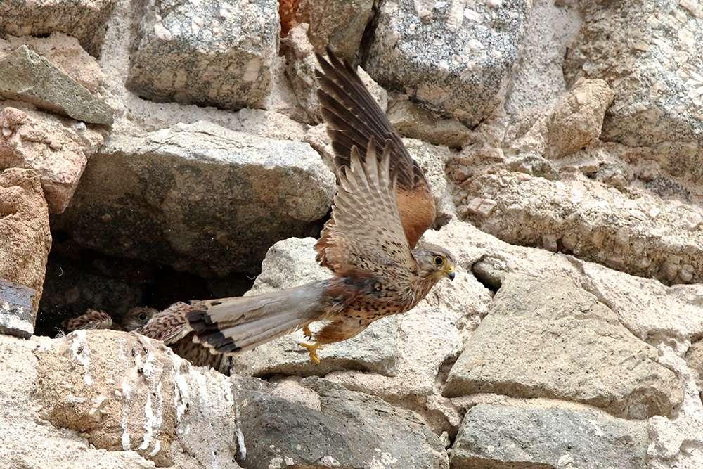 Oiseaux en Corse - Page 2 Img_7511