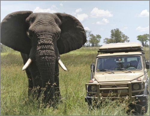 Safari en Afrique en G... Captur30