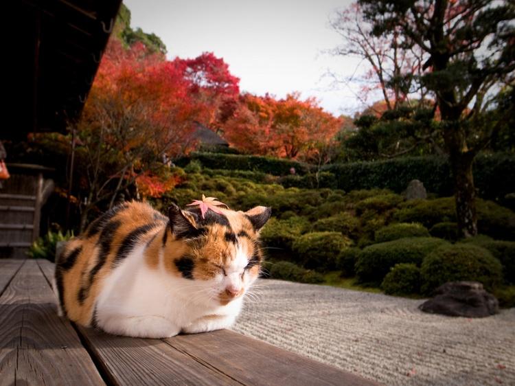 [Vidéo] Magnifique !!!  - Page 2 Kyoto010