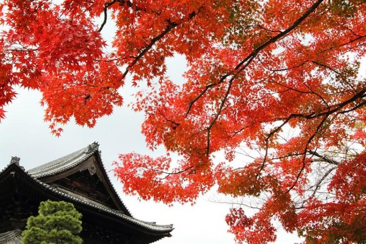 [Vidéo] Magnifique !!!  - Page 2 Kyoto011