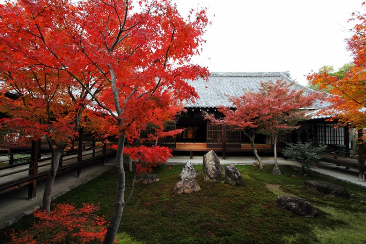 [Vidéo] Magnifique !!!  - Page 2 Kyoto012