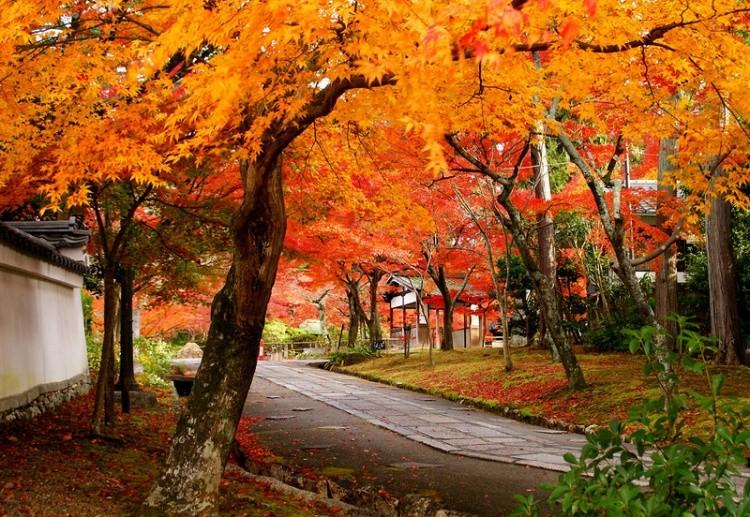 [Vidéo] Magnifique !!!  - Page 2 Kyoto013