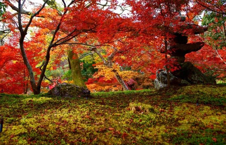 [Vidéo] Magnifique !!!  - Page 2 Kyoto019