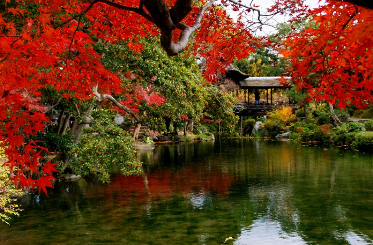 [Vidéo] Magnifique !!!  - Page 2 Kyoto020