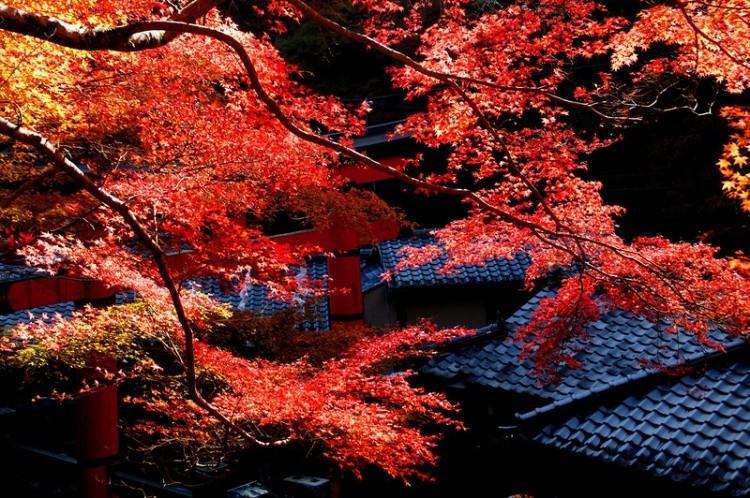 [Vidéo] Magnifique !!!  - Page 2 Kyoto026