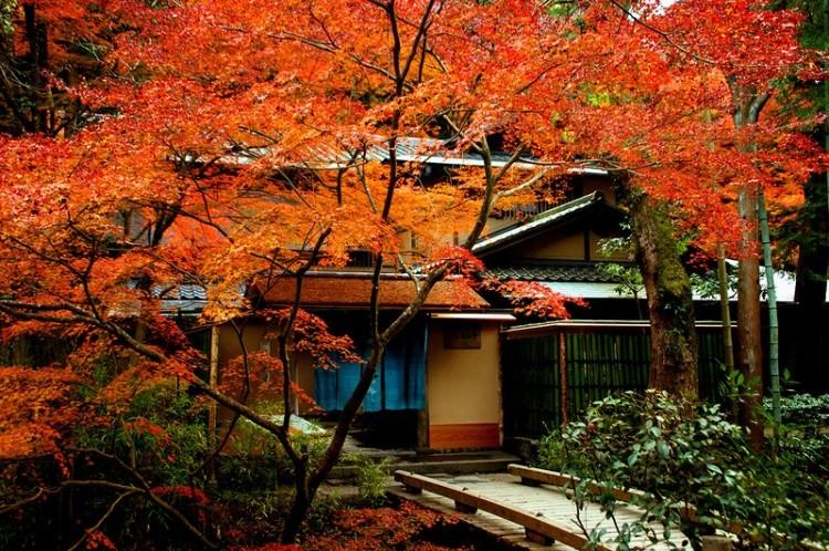 [Vidéo] Magnifique !!!  - Page 2 Kyoto032
