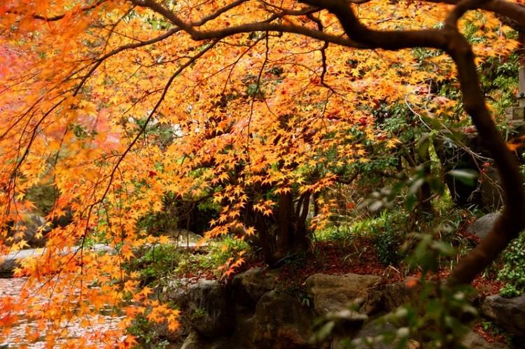 [Vidéo] Magnifique !!!  - Page 2 Kyoto033
